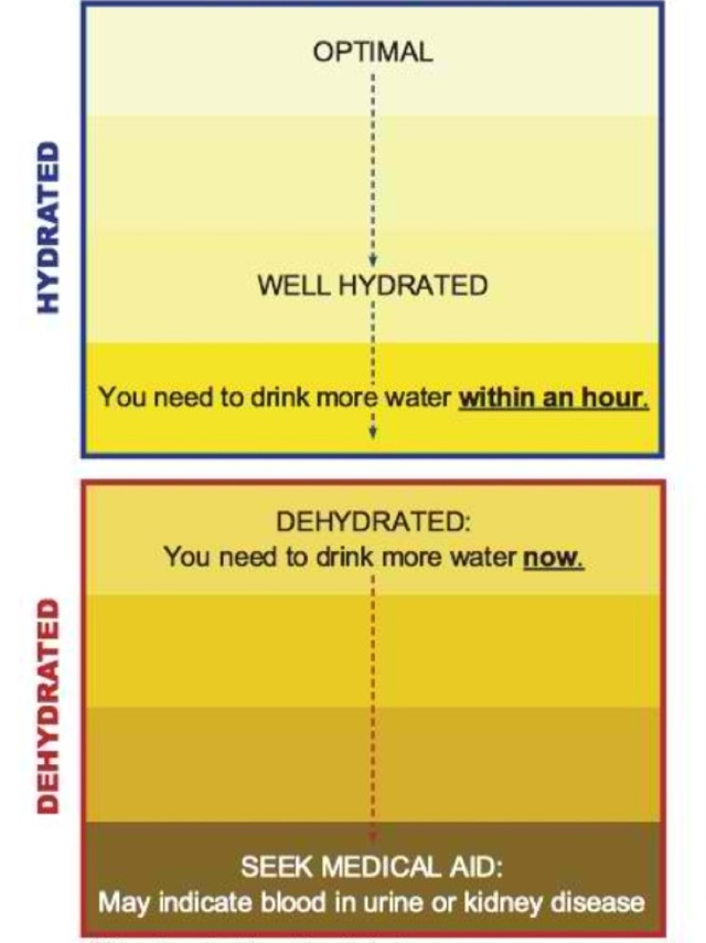 Urine Color Chart:Check Your Hydration Level | Ph7Pluswater